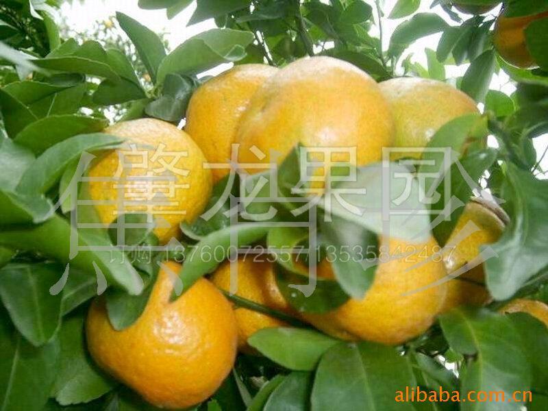 专业生产广东特产德庆高要广宁果品干货