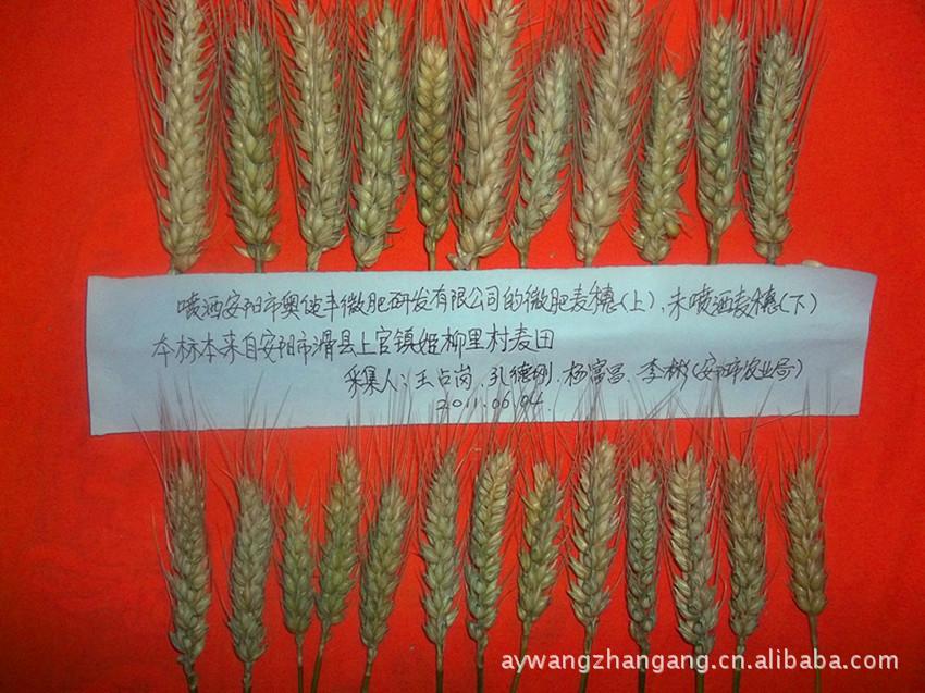 肥料 叶面肥 小麦叶面肥 玉米叶面肥 叶面肥批发 叶面肥厂家