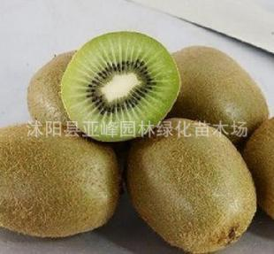 爬藤类果苗 被誉为维C之哑特猕猴桃苗 是无公害果品之一