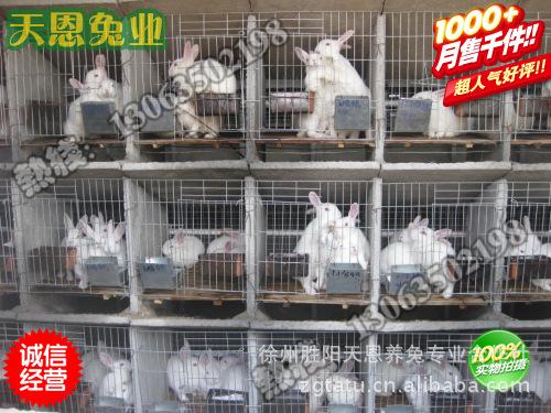 想致富养獭兔免费学习獭兔养殖技术 回收商品獭兔