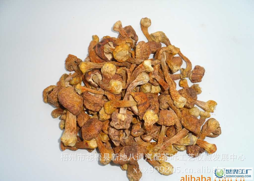 供应野生松茸菌,纯天然珍贵希有食用菌.