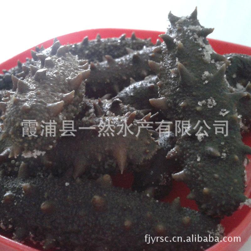 霞浦水产 腌制海参 拉缸盐海参 低价特卖 680元/斤