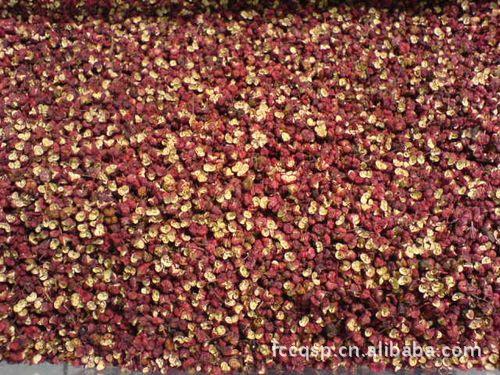长期大量供应优质花椒 多品种 鲜花椒 货源充足(欢迎来电详询)