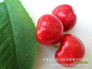 专业供应樱桃种子(图)  品质多 质量优