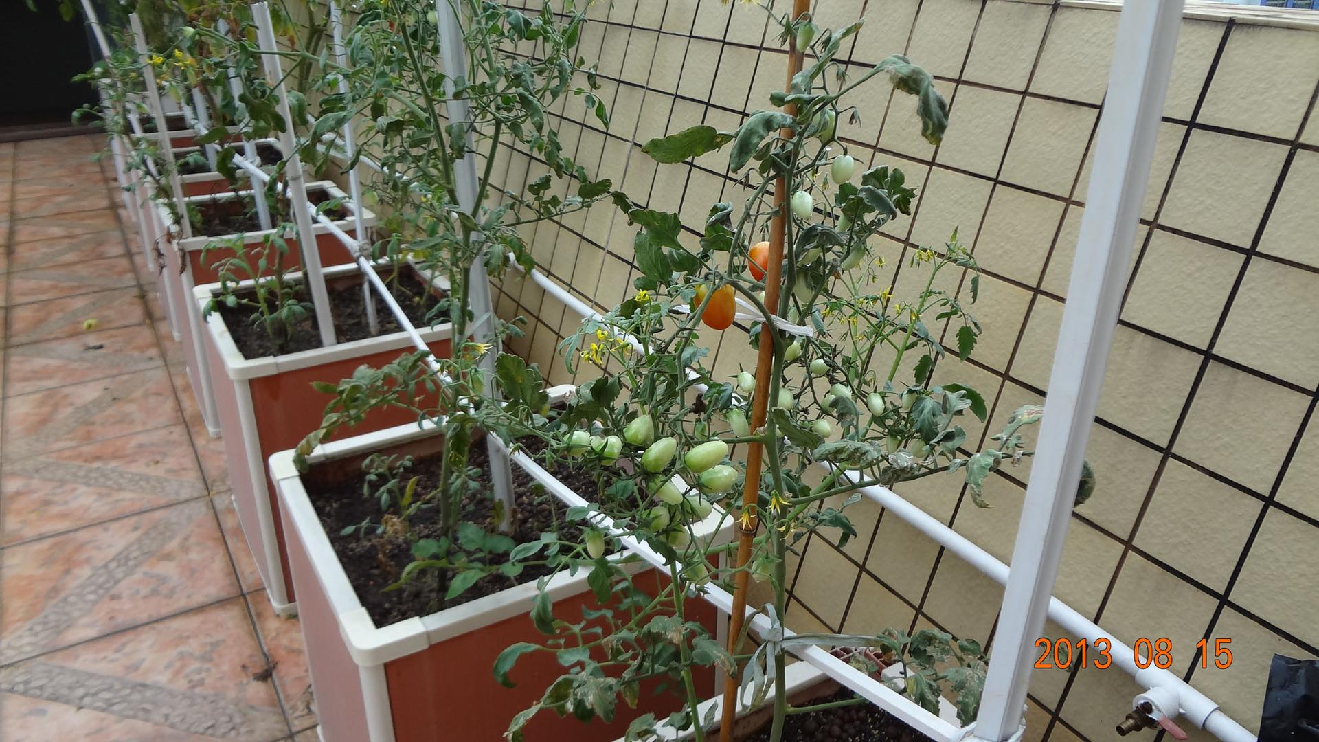 阳台种菜 屋顶种菜 致富种植箱 -价格,厂家,图片,塑料板 片 卷 ,东图片