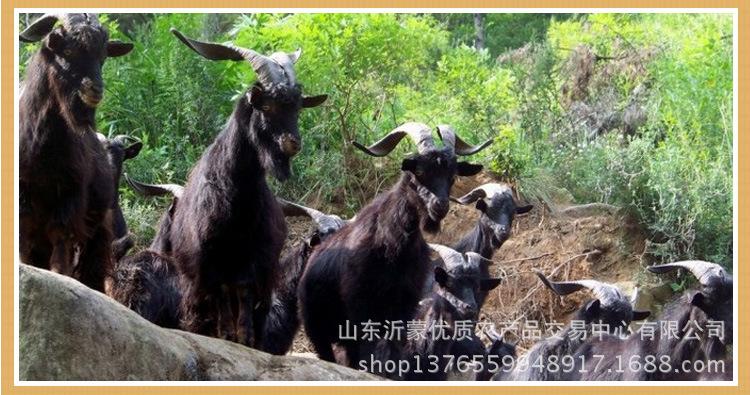 全羊肉汤1_09