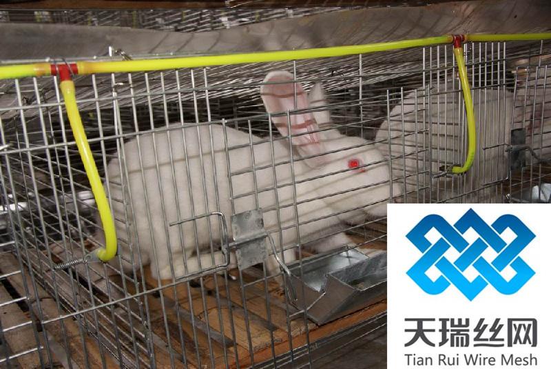养殖用鸽笼 鸽子笼具 鸽子笼 鸽子笼具 养殖用鸽笼 阿里巴巴图片