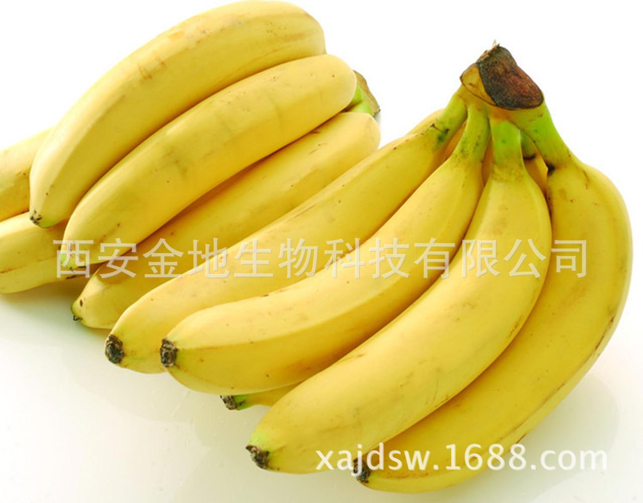 【诚信通会员,厂家批发】,天然,香蕉提取物/香蕉果粉