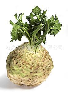 根芹种子 特色蔬菜芹菜种子 高产抗病 寿光蔬菜种子