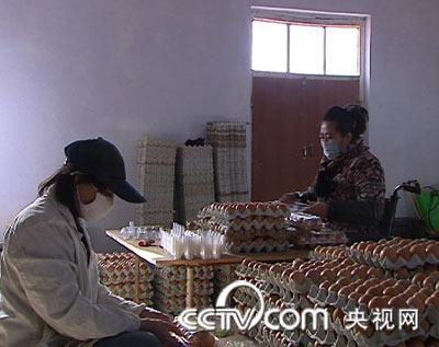 黄粉虫养鸡 年赚两百万 鸡 农业<a href=http://www.chinabreed.com/news/zhifujing/ style=text-decoration:underline;font-size:14px;color:#136ec2; target=_blank>致富经</a> CCTV7<a href=http://www.chinabreed.com/news/zhifujing/ style=text-decoration:underline;font-size:14px;color:#136ec2; target=_blank>致富经</a> 农业